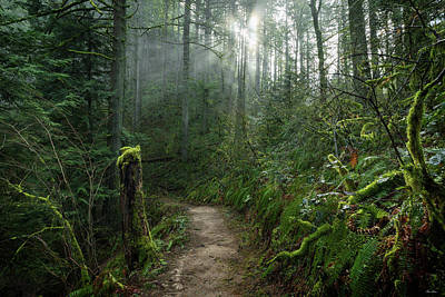 Photograph - Latourell Trail by C Steele
