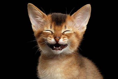 Laughing Kitten  Art Print