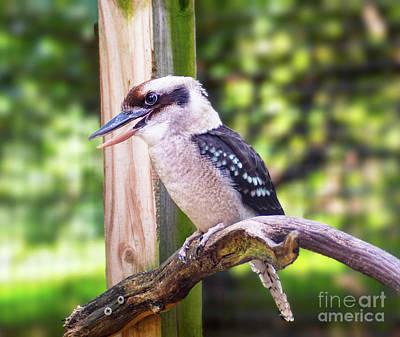 Photograph - Laughing Kookaburra by Kathy Kelly