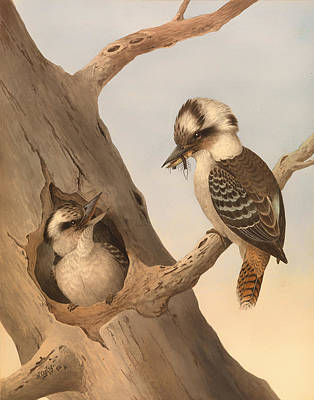 Laughing Kookaburra Art Print by Mountain Dreams