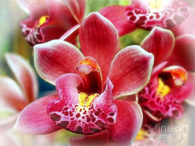 Photograph - Laughing Orchids by Sue Melvin