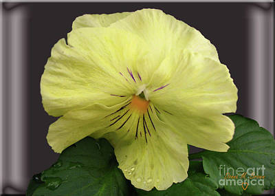 Art Print featuring the photograph Laughing Pansy by Donna Brown