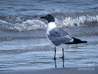 Photograph - Laughing Seagull At The Beach by Ella Kaye Dickey