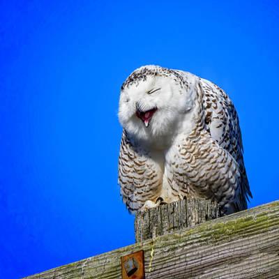 Photograph - Laughing Snowy Owl  by LeeAnn McLaneGoetz McLaneGoetzStudioLLCcom
