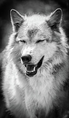 Photograph - Laughing Wolf by Athena Mckinzie