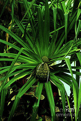 Photograph - Lauhala Plant by Craig Wood