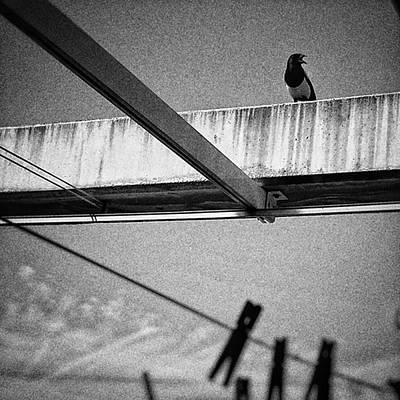 Animals Wall Art - Photograph - Laundry Bird  #bird #animal by Rafa Rivas