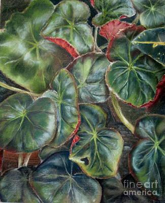 Laura's Begonia Art Print by Karen Boudreaux