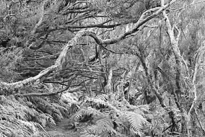 Photograph - Laurel Forest Monochrome by Marek Stepan