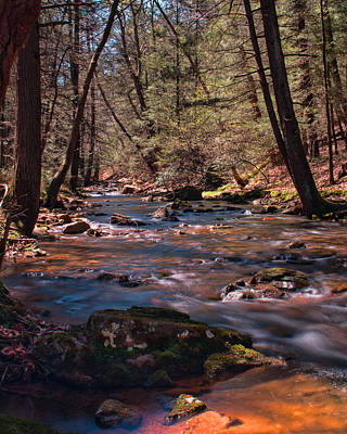 Photograph - Laurel Run - Tuscarora State Forest by Kristia Adams
