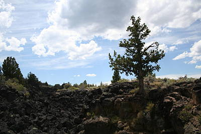 Photograph - Lava Beds Juniper by Dylan Punke