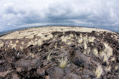 Photograph - Lava Field by Joe Belanger