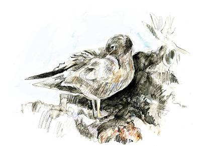 Lava Gull Art Print