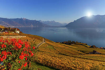 Photograph - Lavaux Region, Vaud, Switzerland by Elenarts - Elena Duvernay photo