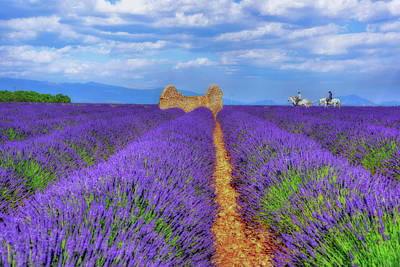 Photograph - Lavendar And White Horses by Midori Chan