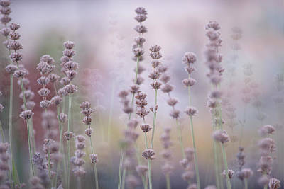 Photograph - Lavender by Bonnie Bruno