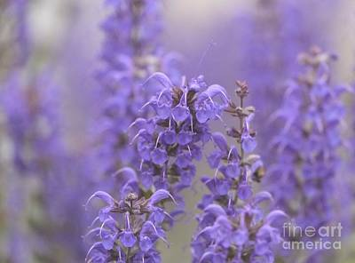 Red Photograph - Lavender -3- by Issabild -