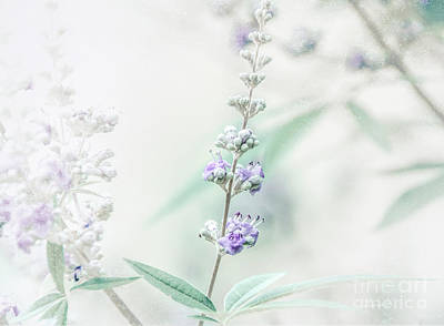 Photograph - Lavender 4 by Andrea Anderegg