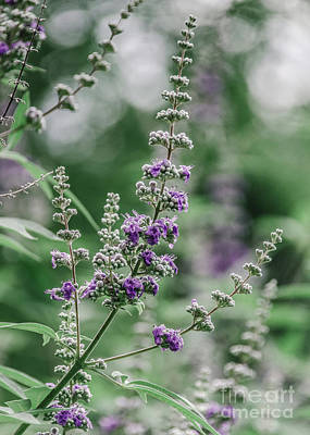 Photograph - Lavender 5 by Andrea Anderegg