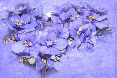 Photograph - Lavender African Violets by Phyllis Denton