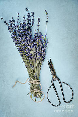 Art Print featuring the photograph Lavender And Antique Scissors by Stephanie Frey