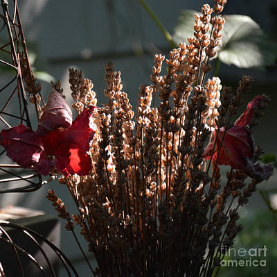 Photograph - Lavender And Grape Leaves Illuminated By The Fall Sun by Tanya Searcy