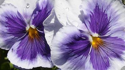Photograph - Lavender Beauties by Bruce Bley
