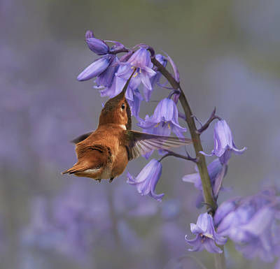 Photograph - Lavender Bells by Angie Vogel