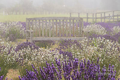 Photograph - Lavender Bench by Louise Magno
