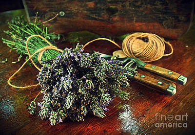 Photograph - Lavender by Binka Kirova