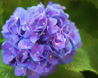 Photograph - Lavender Blue Loveliness by Kathy Clark