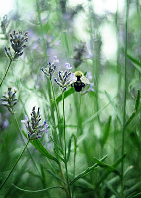Photograph - Lavender Blue by Rebecca Sherman