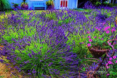 Photograph - Lavender Blue by Rick Bragan