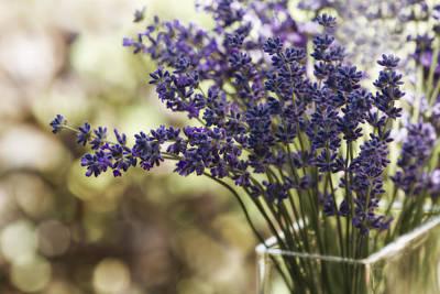 Lavender Bokeh Art Print