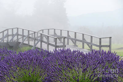 Photograph - Lavender Bridge by Louise Magno