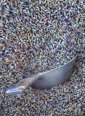 Photograph - Lavender Bud Scoop by Susan Garren
