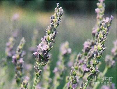 Art Print featuring the painting Lavender by Eric  Schiabor