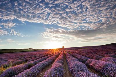Lavender Art Print by Evgeni Dinev