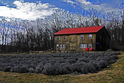 Photograph - Lavender Farm by Elsa Marie Santoro