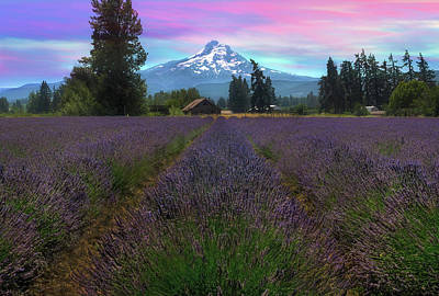 Wall Art - Photograph - Lavender Field In Hood River Oregon After Sunset by David Gn