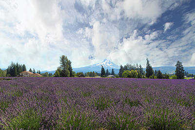 Wall Art - Photograph - Lavender Field In Hood River Oregon by David Gn