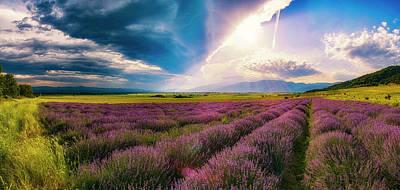 Lavender Field Panorama Art Print