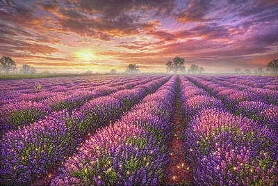 Sunset Painting - Lavender Field by Phil Jaeger