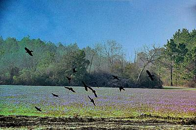 Country Scene Digital Art - Lavender Fields Aglow by Jan Amiss Photography