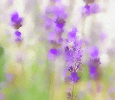 Photograph - Lavender Fields Forever by Andrea Kollo