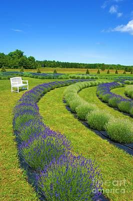 Photograph - Lavender Fields Forever by Brigitte Emme