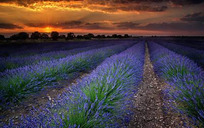 Photograph - Lavender Fields by Hernan Bua