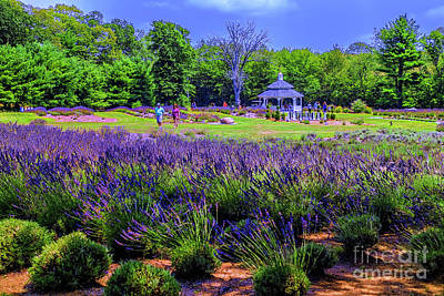 Photograph - Lavender Fields by Rick Bragan