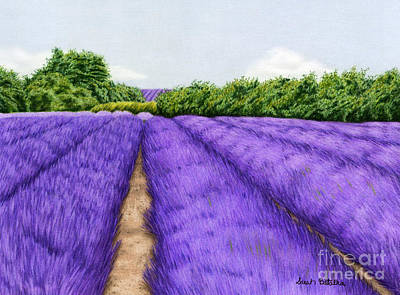 Hills Drawing - Lavender Fields by Sarah Batalka