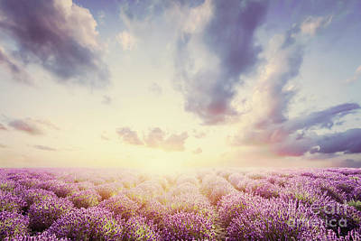 Photograph - Lavender Flower Field At Sunset. Vintage by Michal Bednarek